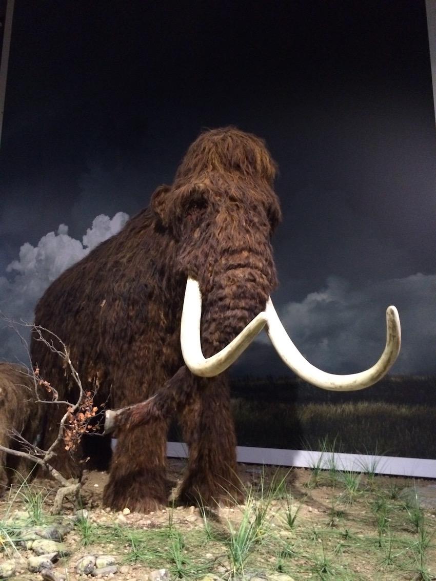 mammutti